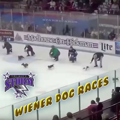 Tri-City Storm hockey team sponsors a wiener dog race on ice