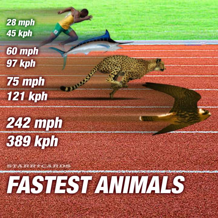 World's fastest animals: Usain Bolt gets blown away by swordfish, cheetah and peregrine falcon